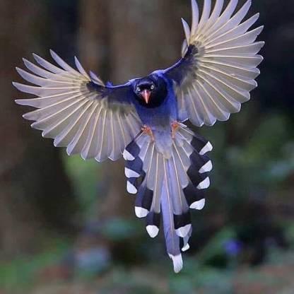 1.2 Beautifull Bird stare 9-16-19